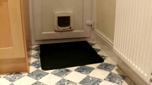 Watch Our house rabbit Honey using the cat flap GIF on Gfycat. Discover more Pets, bunny, rabbit GIFs on Gfycat