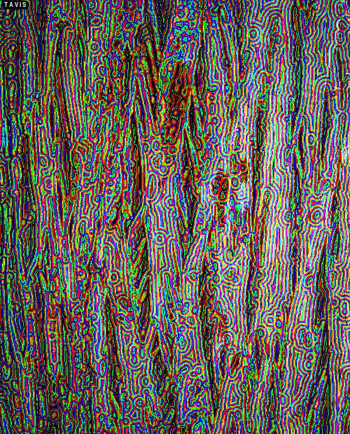 Watch tree bark GIF on Gfycat. Discover more color halftone, halftone, nature, photography, psychedelic art, rgb, tavis, tree bark, trippy GIFs on Gfycat