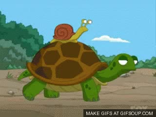 Watch and share Snail On Turtle GIFs on Gfycat