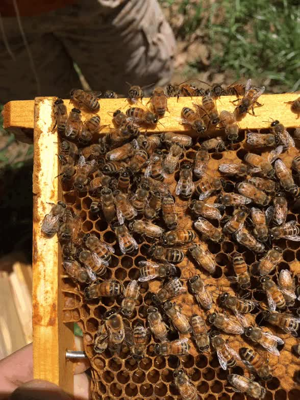 Watch and share Beekeeping GIFs on Gfycat