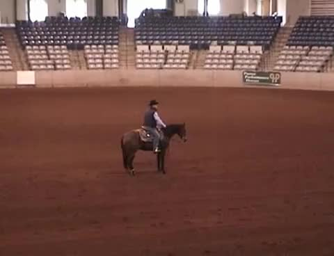 Watch and share Horse Western Spin GIFs on Gfycat