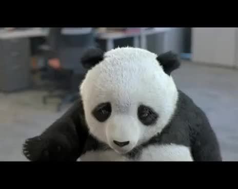Watch this panda GIF on Gfycat. Discover more animals, bear, bears, cute, pand, panda, panda bear GIFs on Gfycat