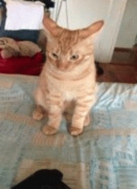 cat, offended cat GIFs