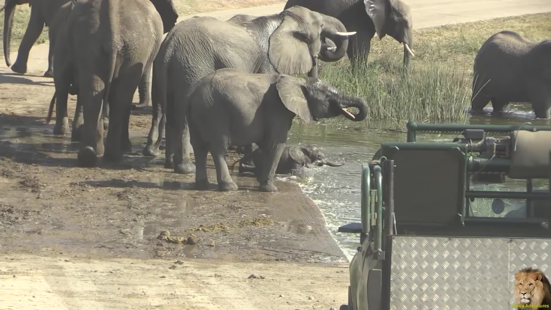 Kruger National Park, Road Block, Tsendze River, Cute Baby Elephants Road Block GIFs