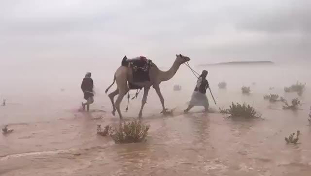 Watch and share Kuwait Desert GIFs on Gfycat