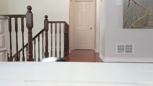 Watch this cat GIF by Caileigh Mc (@cailsmc) on Gfycat. Discover more adorable, aww, black and white, cat, cute, focused, hunter, kitten, super focused GIFs on Gfycat
