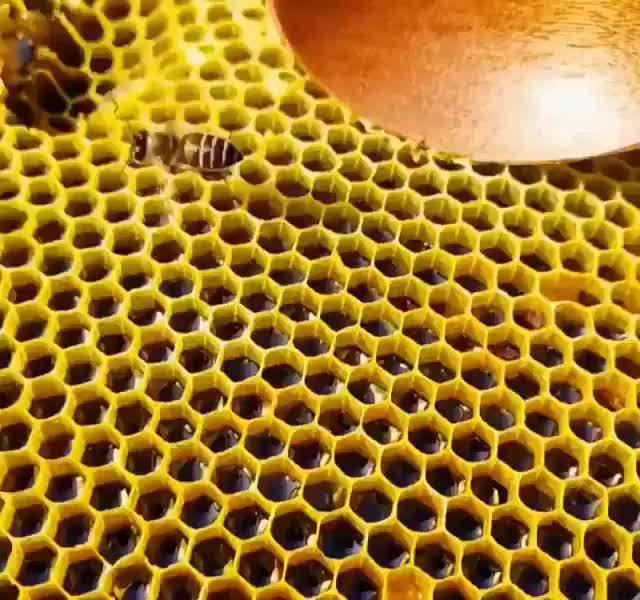 Scooping honey GIFs