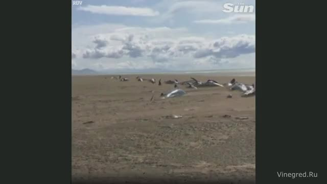 Watch and share Iceland GIFs and Whales GIFs by Vinegret on Gfycat