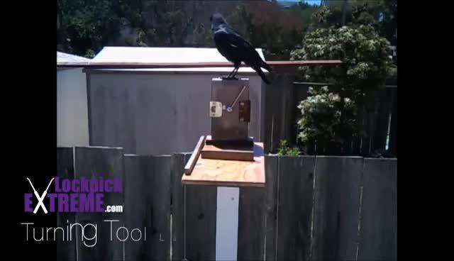 Lockpicking Ravens GIFs