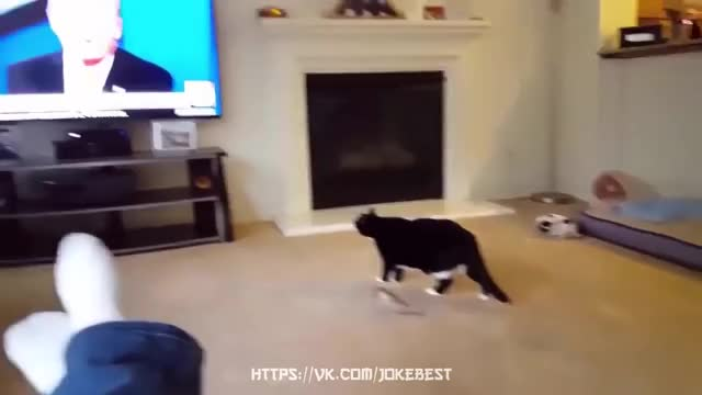 Watch and share Compilation GIFs and Joke GIFs on Gfycat