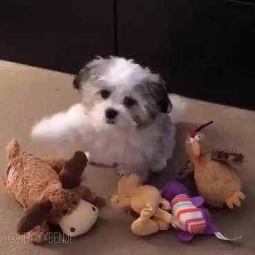 Watch Who's your best friend? GIF on Gfycat. Discover more Fluffy, benji, benjithepizzadog, bestfriend, bff, cute, funny, heyyybenji, heyyybenjiofficial, pizza, pizzadog, puppy, whosyourbestfriend, whosyourbestfrienddog GIFs on Gfycat