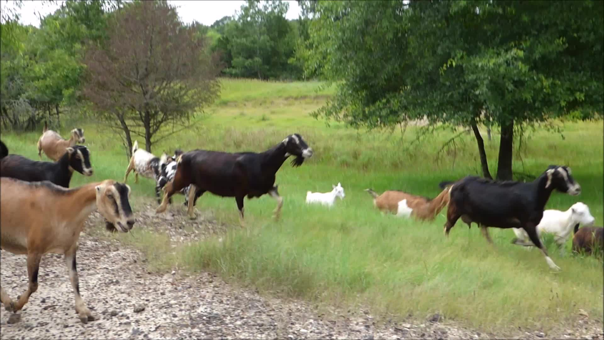 animal, animals, goatparkour, goats, knsfarm, Slow-Motion Kick Out GIFs