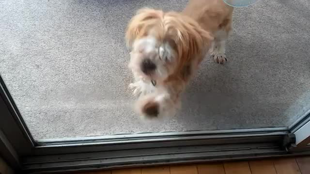 Watch and share Amazinglife GIFs and Instaanimal GIFs by ksiniti on Gfycat