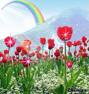 Watch and share Tulip Flowers GIFs on Gfycat