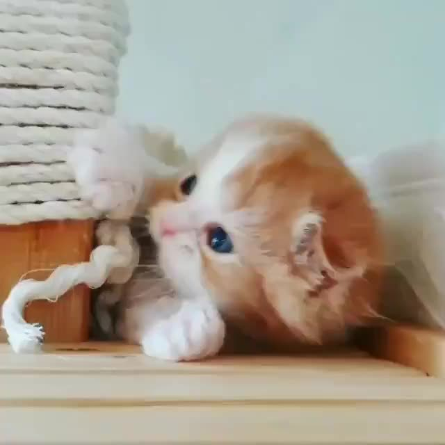 Watch and share Kitten GIFs by Mecha熊 ✔️  on Gfycat