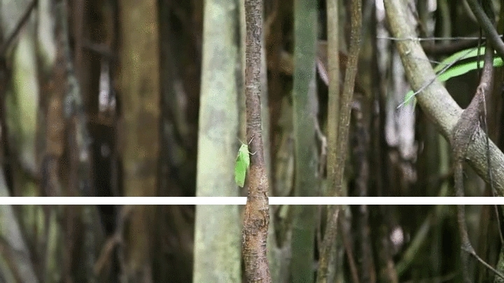 SplitDepthGIFS, splitdepthgifs, [Fulfilled Request] - Tarsier. This is my first time making something like this, feedback would be appreciated (reddit) GIFs