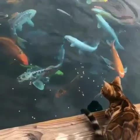 Touch ALL tha fishies! GIFs