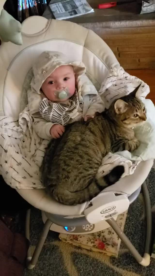 Watch and share Baby GIFs and Cat GIFs by notmyproblem on Gfycat