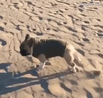 Watch Clumsy dog is clumsy GIF on Gfycat. Discover more related GIFs on Gfycat