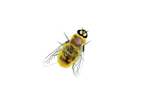 Watch this bee GIF on Gfycat. Discover more bee, bees GIFs on Gfycat