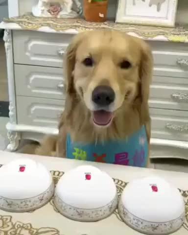 Watch and share Dog GIFs on Gfycat