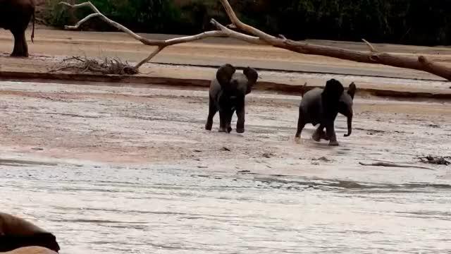 Watch Lost Elephant Babies GIF on Gfycat. Discover more baby elephants, babyelephantgifs, save the elephants GIFs on Gfycat