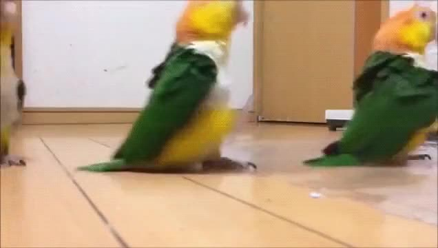 Watch and share Birb GIFs by superpie8 on Gfycat