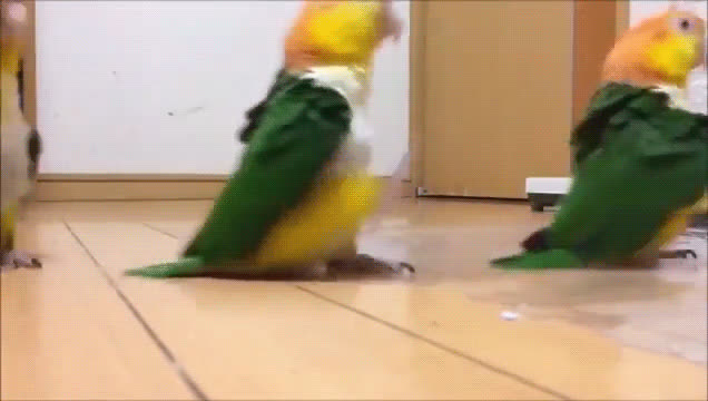 birb, youtubehaiku, birb march GIFs
