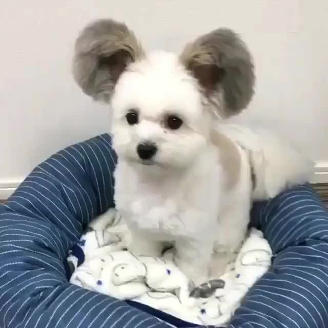 Watch and share Cute GIFs and Dog GIFs by GB on Gfycat