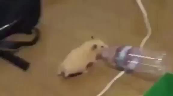 Lil' Hamster