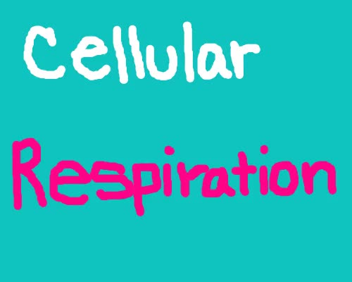 Watch and share Cellular Respiration animated stickers on Gfycat