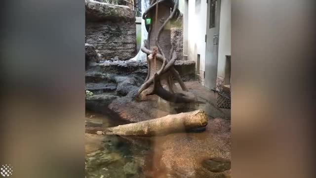 Watch and share Amazing World Video GIFs and Funny Otters Videos GIFs by GIFs For Everything on Gfycat
