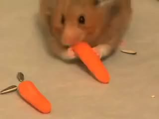 Watch and share Hamster GIFs and Cheeks GIFs on Gfycat