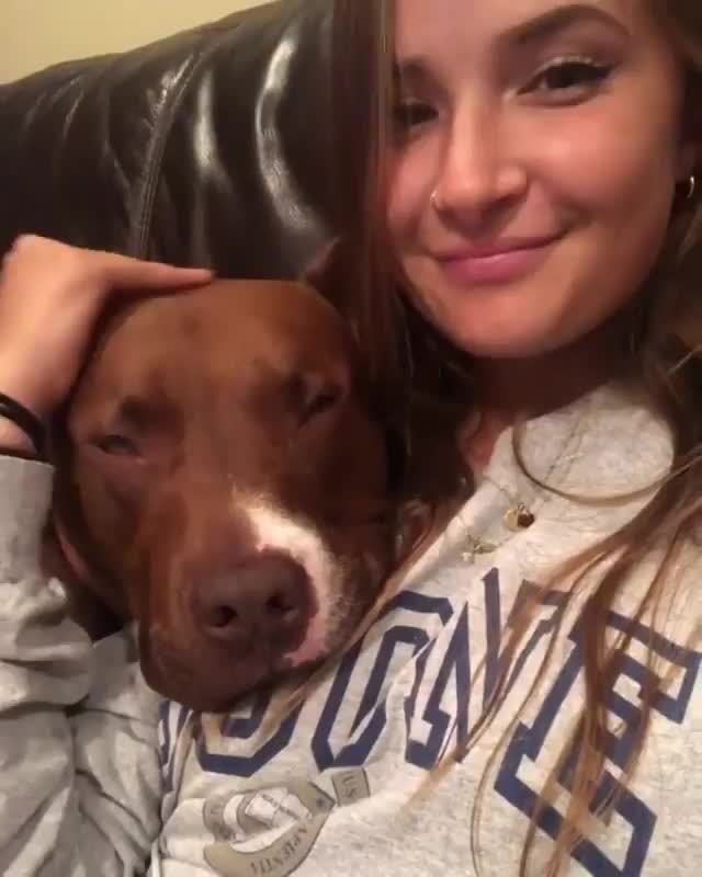 Watch and share Puppies GIFs and Dogs GIFs by tothetenthpower on Gfycat
