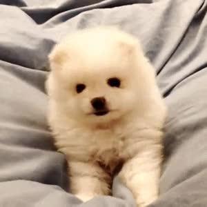 Watch and share ¿Tu Perro Duerme Contigo En La Cama? — Instituto Perro GIFs on Gfycat