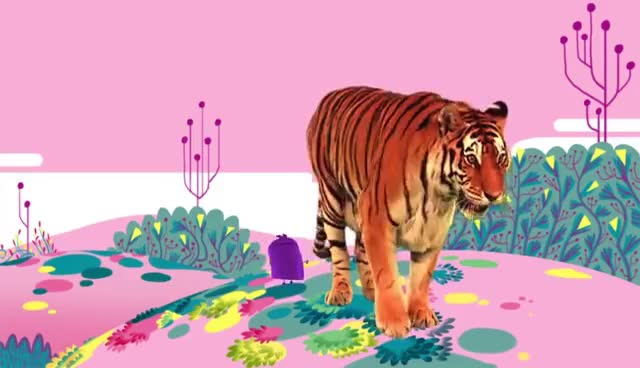 animal, animals, cat, tiger, tigers, tigress, Animal Songs: