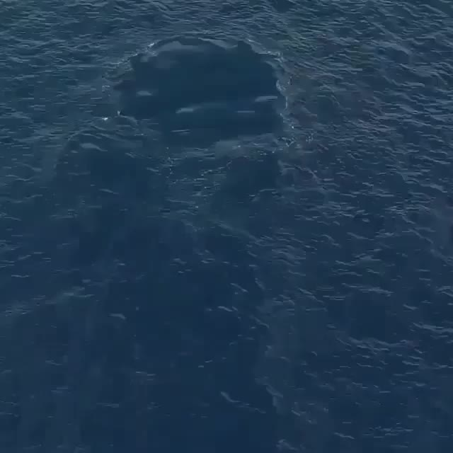 nature, aerial footage of a humpback breaching GIFs