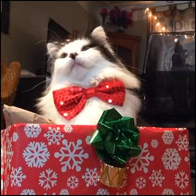 Watch this boxing day GIF on Gfycat. Discover more related GIFs on Gfycat