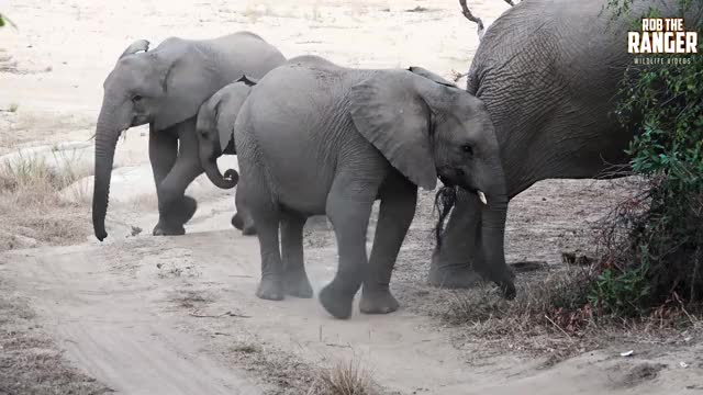 Watch and share Nature Documentary GIFs and African Wildlife GIFs by PM_ME_STEAM_K3YS on Gfycat