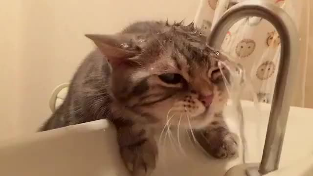 Watch this cat GIF by @onlyanenigma on Gfycat. Discover more cat, cats, thirsty GIFs on Gfycat