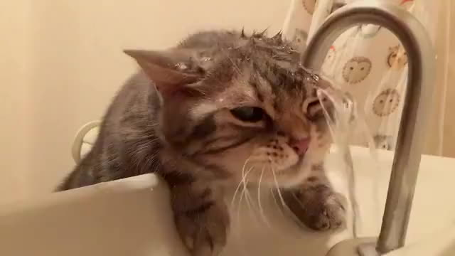 cat, cats, thirsty, Thirsty kitty. 🐱😝💦 GIFs