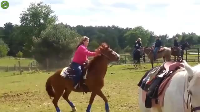 Watch and share Horse GIFs and John GIFs on Gfycat
