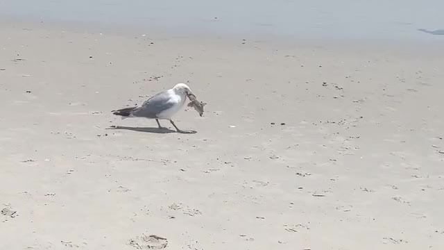 Watch and share Seagull GIFs and Beach GIFs on Gfycat