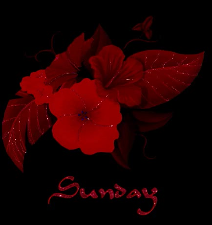 Watch and share Sunday Red Flower Glitter GIFs on Gfycat