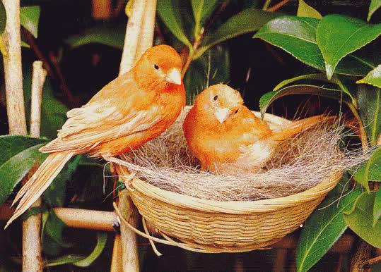 GIF animado de aves moviendo la cabeza GIFs