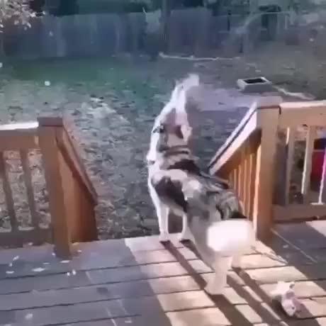 Howling spirit - gif