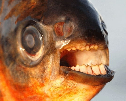 Fish, creepygifs, Testicle Fish GIFs