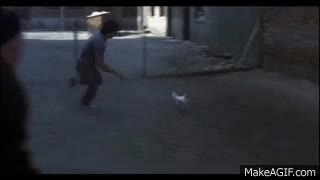 Watch and share Chasing GIFs on Gfycat
