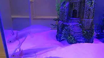 Watch Markiplrrrr & Jackseptudig  GIF on Gfycat. Discover more Axolotls, axolotl, cutiepiemarzia, pewdiepie GIFs on Gfycat