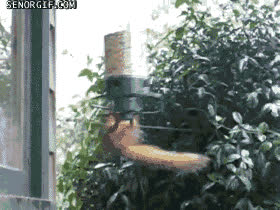 Squirrel Spinning GIF by Cheezburger - Find & Share on GIPHY GIFs